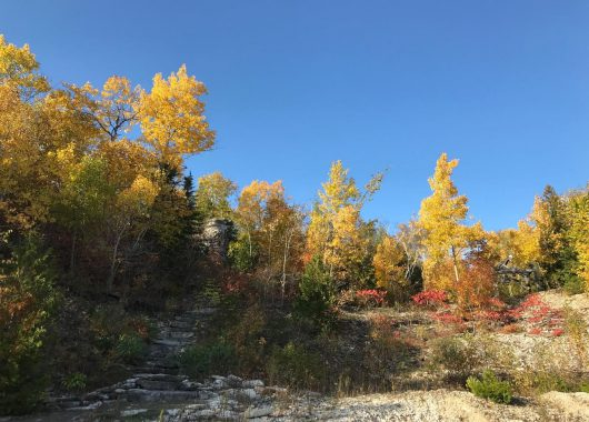 quarry forest