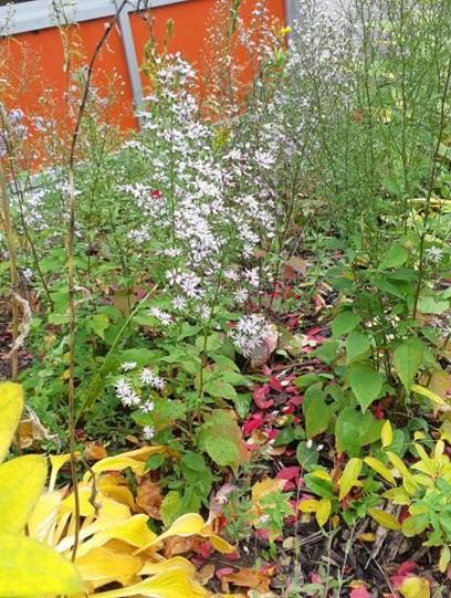 Native and Ornamental Brookfield plants