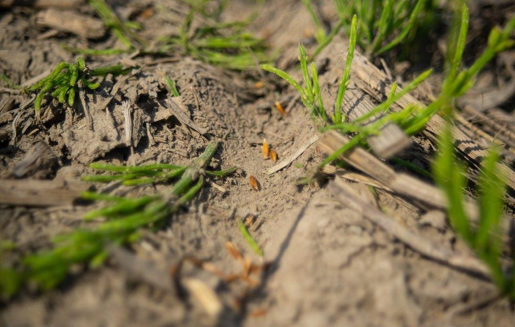 Soil trough with seed closeup. Credit: Lindsay Ralph, 2021