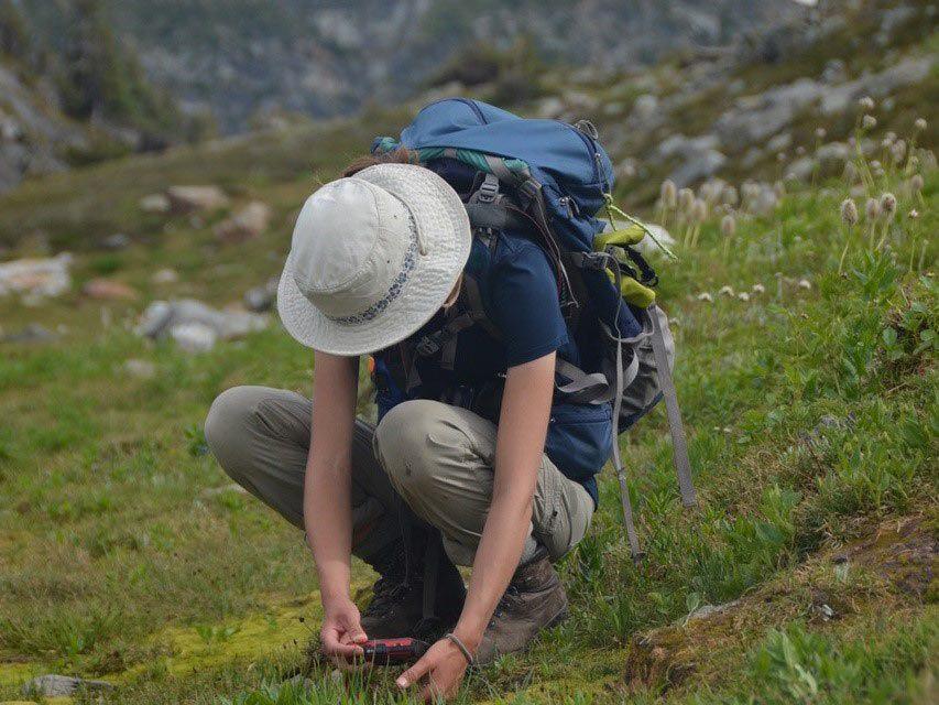 Consignation dans iNaturalist de plantes alpines au parc provincial Wells Gray, en 2020.